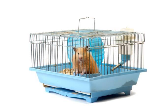 O ratinho e a gaiola: o ser humano como cobaia